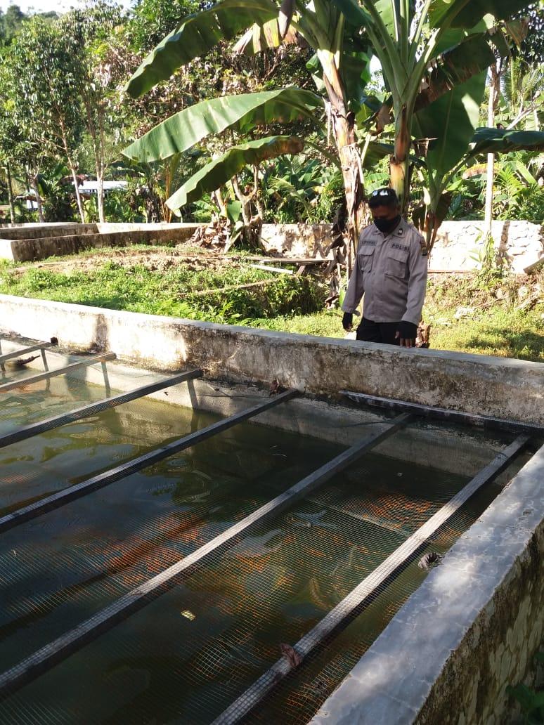 Kanit Binmas Polsek Makbon Cek Ketahanan Pangan Teluk Dore Distrik Makbon