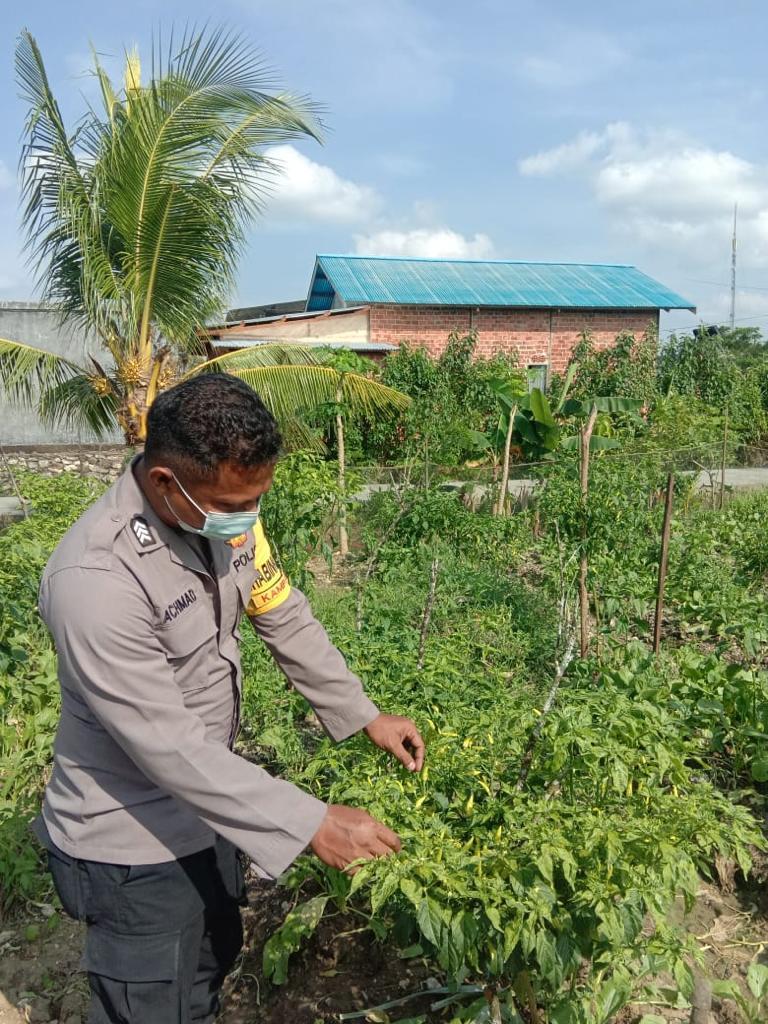 Bhabinkamtibmas Polsek Beraur Cek Ketahanan Pangan Warga Binaannya Di KTN Malamoja Distrik Malabotom