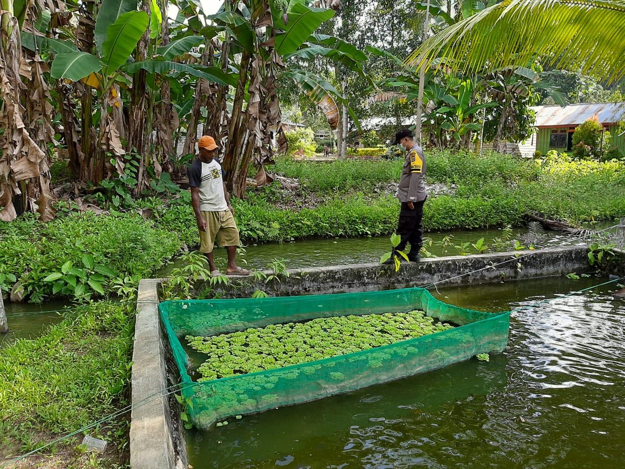 Bhabinkamtibmas Polsek Sausapor Monitoring Program Ketahanan Pangan Budidaya Ikan Air Tawar