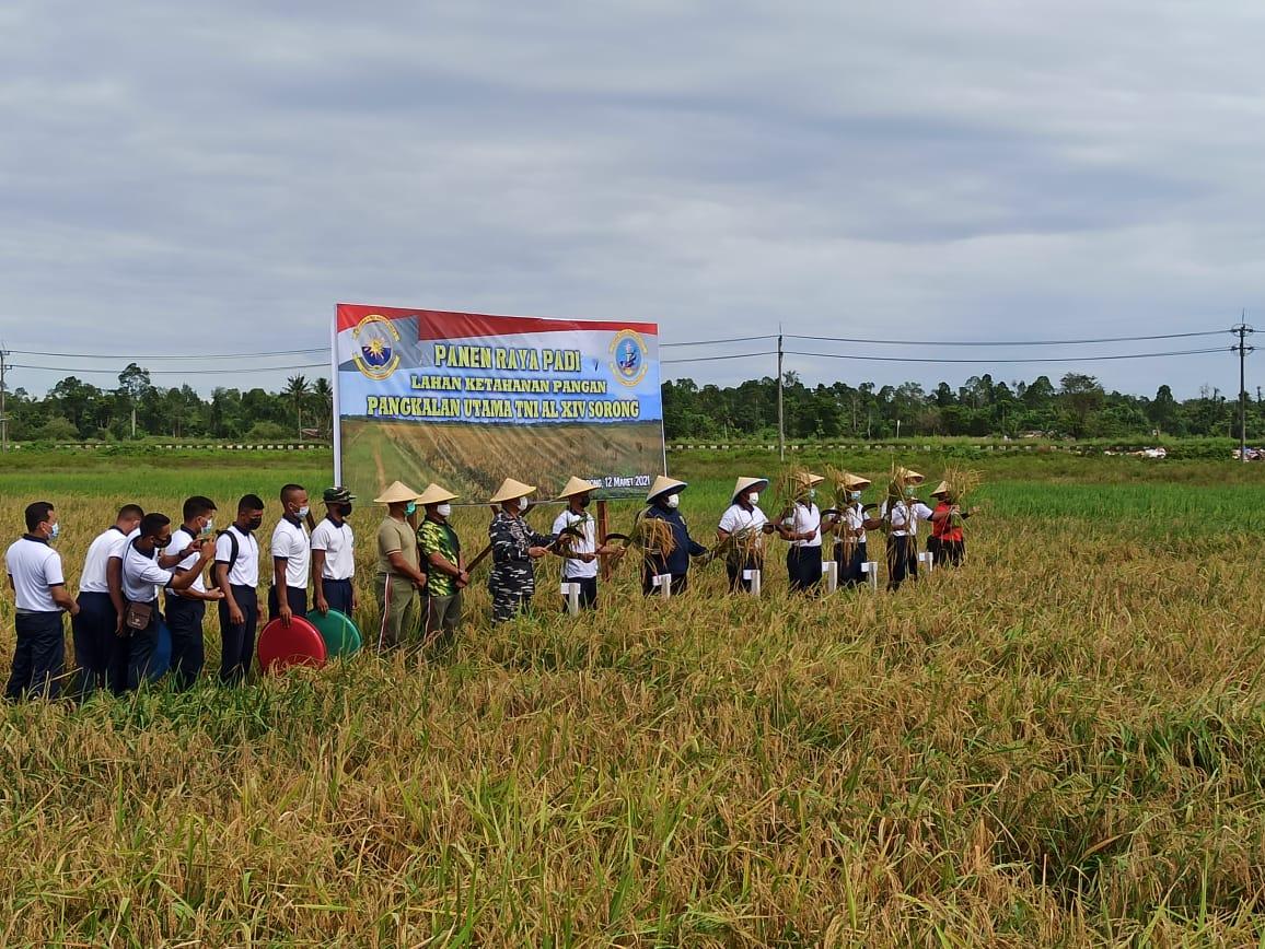 Kapolres Sorong Di Wakili Waka Polres Sorong Hadiri Panen Raya Padi Lahan Ketahanan Pangan Pangkalan Utama TNI AL XIV Sorong